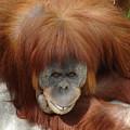 Orangutan by Luciana Seymour