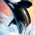 Orca 1 by Jerry LoFaro