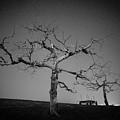 Orchard Bw by Jason Rinehart