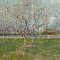 Orchard In Blossom, Plum Trees by Vincent van Gogh
