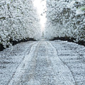 Orchard In White by Michael and Kristi Knevelbaard