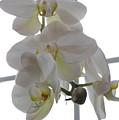 Orchid - 101 by David Bearden