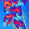 Orchid 1 by Tim Allen