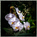 Orchid 1 Triptych by Greg Kluempers