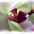 Orchid 2 by David Bearden