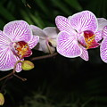 Orchid 2 by Marty Koch