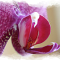 Orchid 4 by David Bearden