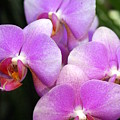 Orchid 5 by Marty Koch