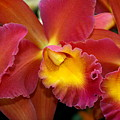 Orchid 8 by Marty Koch