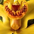 Orchid by Agnieszka Adamska