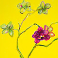 Orchid And Amarillo by Sharon Allen