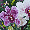 Orchid At Aos 2010 by Donna Walsh