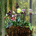 Orchid Basket by Cindy Manero