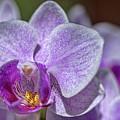 Orchid by Dan McManus