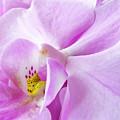 Orchid by Daniel Csoka