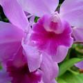 Orchid Deep by Amanda Vouglas
