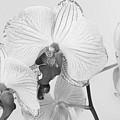 Orchid Delight by Anita Oakley