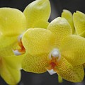 Orchid Family by Eric Liller