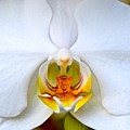 Orchid Fire by Dale Chapel