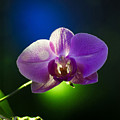 Orchid Flower On Black Background by Brch Photography