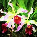 Orchid Flowers Color 1 by Susanna Katherine
