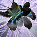 Orchid Inverted by Marian Palucci-Lonzetta