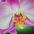 Orchid by John Salozzo