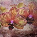Orchid Layers by Mattie Bryant