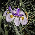 Orchid Magic by Vincent Asbjornsen