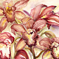 Orchid Medley by Ileana Carreno