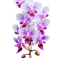 Orchid by Meirion Matthias