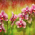 Orchid - Phalaenopsis - Simply A Delight by Mike Savad