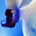 Orchid Serenity by Krissy Katsimbras