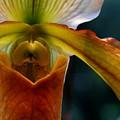 Orchid Slipper by Joanne Smoley