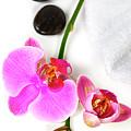 Orchid Spa Composition by Natalia Klenova