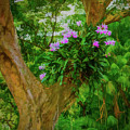Orchid Tree by Gary Eyring