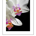 Orchid Underneath Poster by Mike Nellums