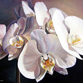 Orchidee by Muriel Dolemieux