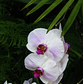 Orchids #1 by Kevin Gladwell