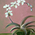 Orchids 2 by Gina De Gorna