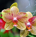 Orchids 35 by Marty Koch