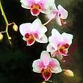Orchids Abound by John Freidenberg