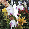 Orchids And Iron by Karen Zuk Rosenblatt