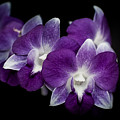 Orchids by Bianca Nadeau