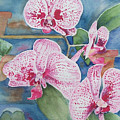 Orchids by Christine Lathrop
