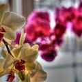 Orchids by David Bearden