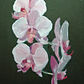 Orchids For Didi by Glenn Secrest