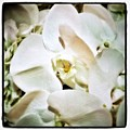Orchids For His Majesty. In Loving by Mr Photojimsf