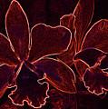 Orchids - For Pele by Kerri Ligatich