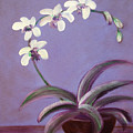 Orchids by Gina De Gorna